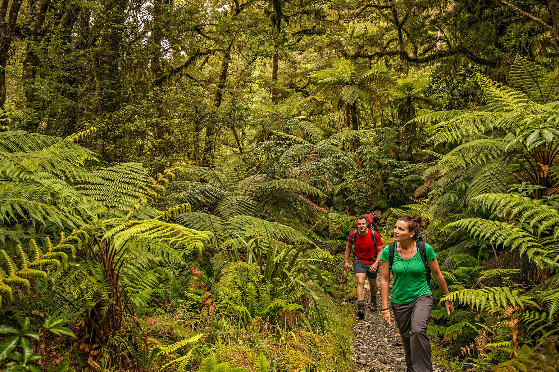 Arthur valley - Milford Track guided walk