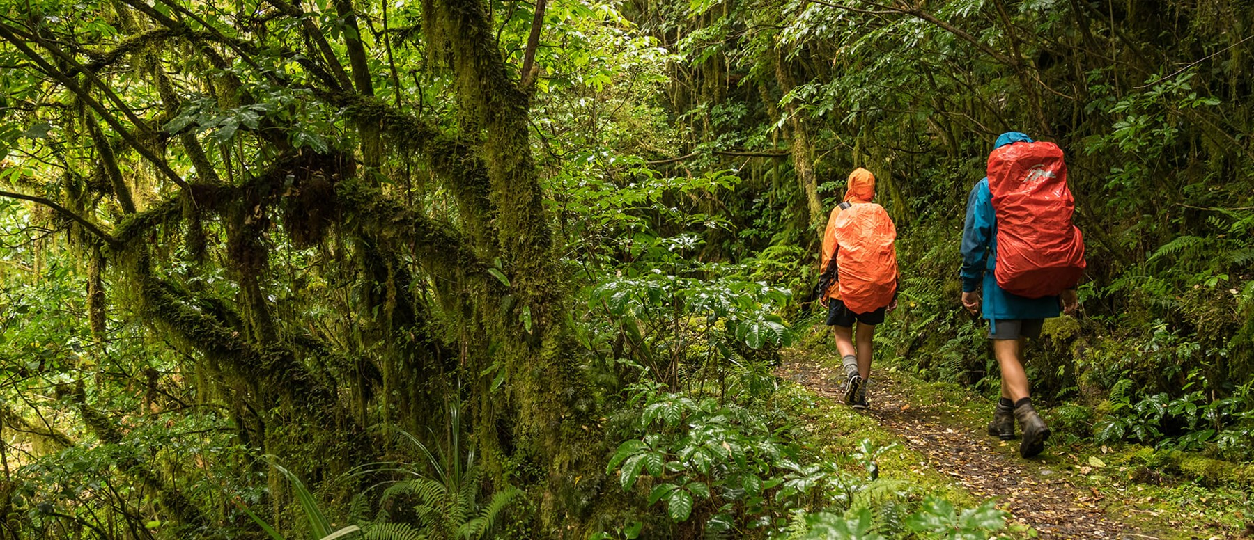Walking in the rain on the Milford Track guided walk